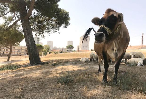 agriculture-urbaine-ferme-de-la-tour-des-pins