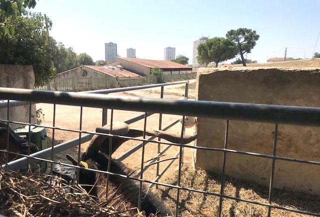 agriculture-urbaine-marseille