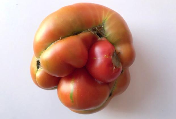 halle-des-producteurs-provence