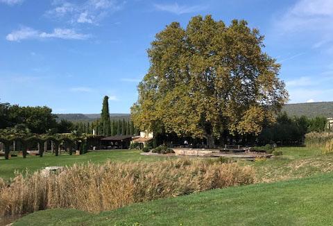 domaine-des-andeols-platane-dejeuner